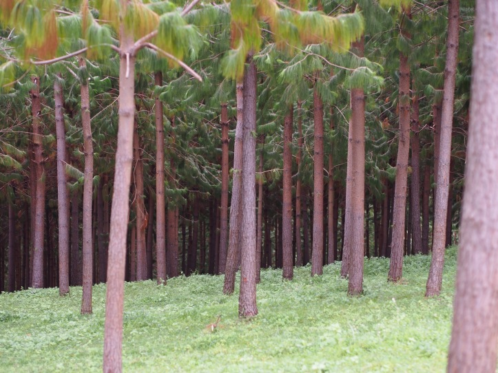 We have planted over 200,000 trees, including this pine reforestation project.