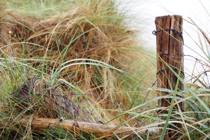 utah-beach-wire